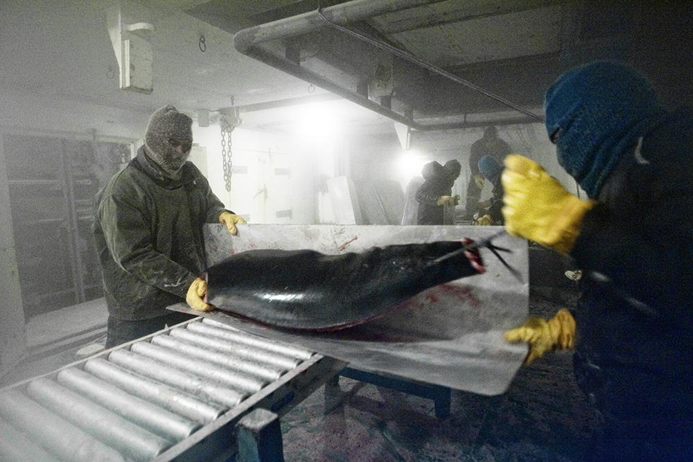 Killing the Tuna